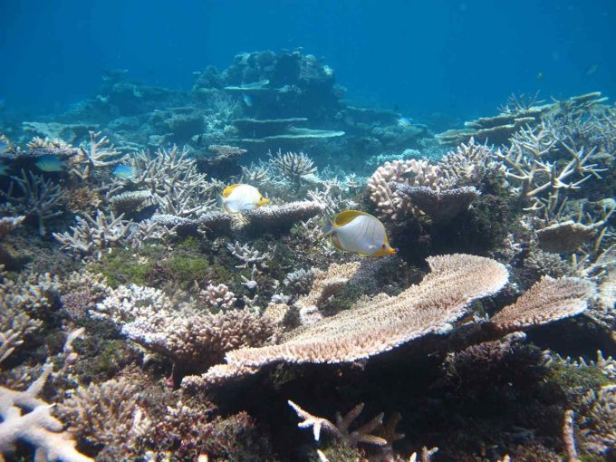 maldives-islands-prontotourNIYAMA_CoralGarden_2015  (36)