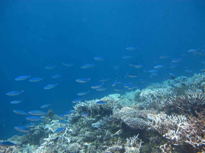 maldives-islands-prontotourNIYAMA_CoralGarden_2015  (60)