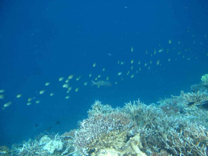 maldives-islands-prontotourNIYAMA_CoralGarden_2015  (67)