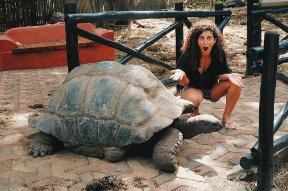 cansu-elter-prison-island-tortoise